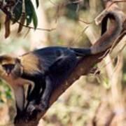 Mona Monkey In A Tree Art Print