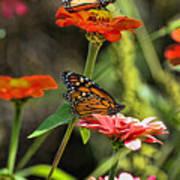 Monarch 8 Art Print