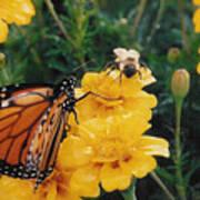#002 Monarch Bumble Bee Sharing Art Print
