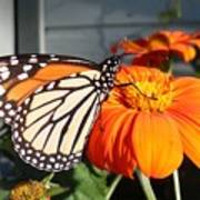Monarch Butterfly 2 Art Print