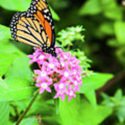 Monarch Butterfly And Honey Bee Art Print
