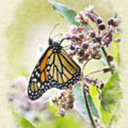 Monarch Butterfly Blank Note Card Art Print