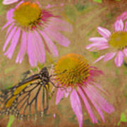 Monarch Butterfly In Pink Art Print