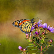Monarch Butterfly In The Afternoon Sun Art Print