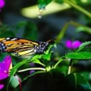 Monarch Buttefly Art Print