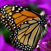Monarch Dreams Art Print