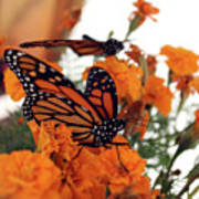 Monarch Series 4 Art Print
