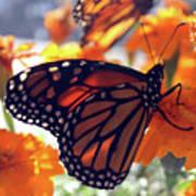 Monarch Series 7 Art Print