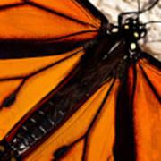 Monarch Triangles Art Print