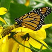 Monarchs Gold Art Print