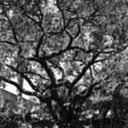 Monastery Tree Art Print