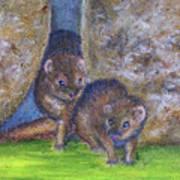 Mongoose #511 Art Print
