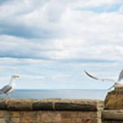 Monitored Seagull Take-off Art Print