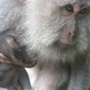 Monkey Mother 3 Art Print