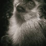 Monkey Portrait Art Print