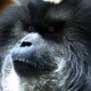 Monkey Stare Art Print