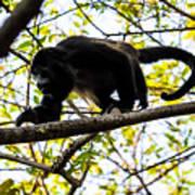 Monkey2 Art Print