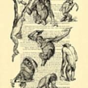 Monkeys Black And White Illustration Art Print