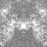 Mono Trees Art Print