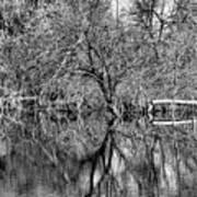 Monochrome Autumn Reflections Art Print
