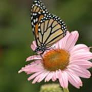 Monorch Butterfly Art Print