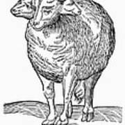 Monster, 16th Century Art Print