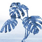 Monstera Leaf-blue Art Print