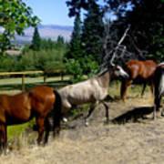 Montana Horses Art Print