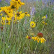 Montana Wildflowers Art Print