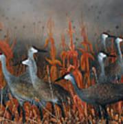 Monte Vista Sandhill Cranes Art Print