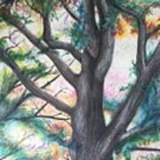 Monticello Tree Art Print