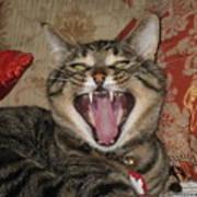 Monty's Yawn Art Print