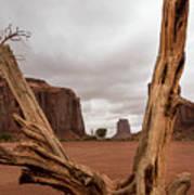 Monument Valley deadwood Art Print