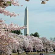 Monumental Cherry Blossoms Art Print