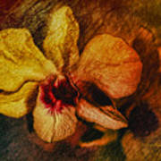 Mood Of The Orchid Art Print