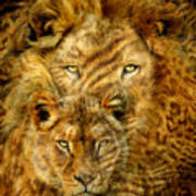 Moods Of Africa - Lions 2 Art Print