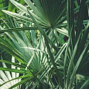 Moody Tropical Leaves Art Print