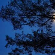 Moon Hiding In The Tree Art Print