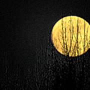 Moon Over The Trees Art Print