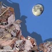 Moon Shadow Art Print