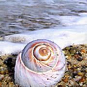 Moon Snail Art Print