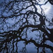 Moonlight And Oak Tree Art Print