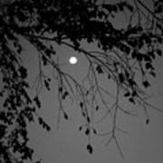 Moonlight - B And W Art Print