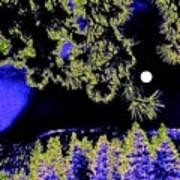 Moonlit High Country Art Print