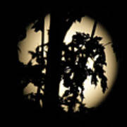Moonlit Leaves No 1 Art Print
