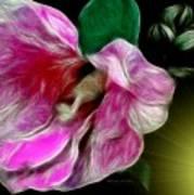 Moonlit Wild Rose Art Print