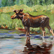 Moose At Henry's Fork Art Print