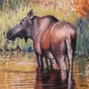 Moose In Alaska Art Print by Terri Thompson
