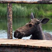 Moose In The Pond Art Print