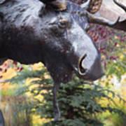 Moose In Vail Art Print